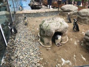 マゼランペンギン ミュージアム